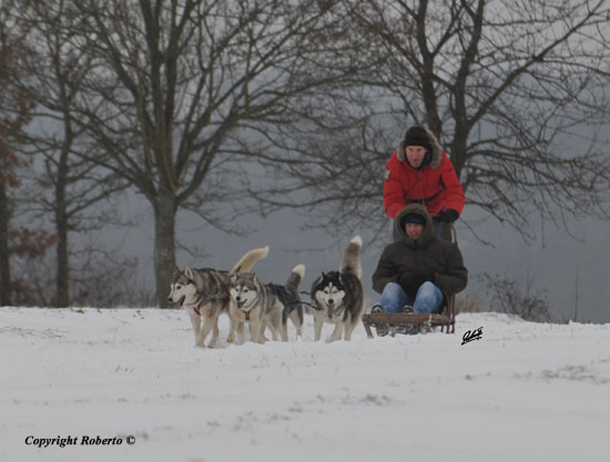 Hightower's Hunde im Winter